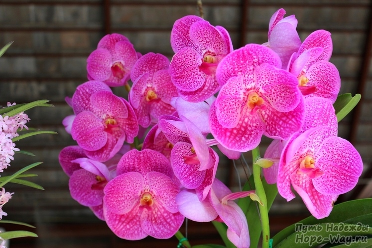 Chiang Mai Annual Orchid Show 2014